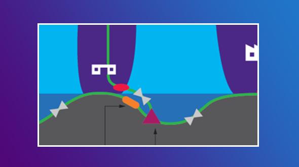Submarine Network Solutions